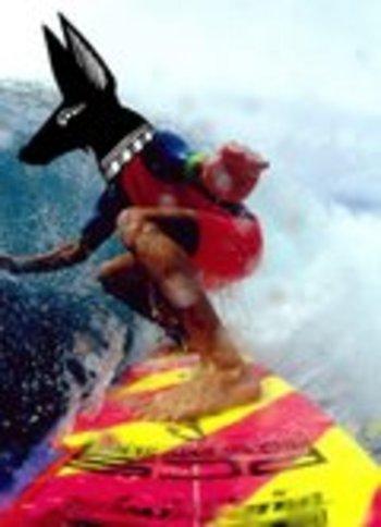 Surfin_anubis