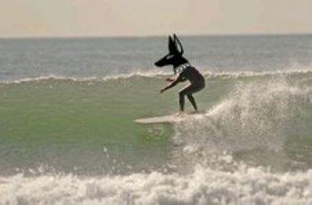 Surfing_anubis2